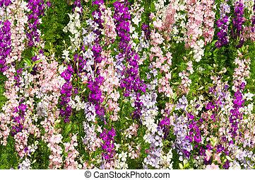 Delfinium flowers - Larkspur - Delfinium flowers, lots of ...