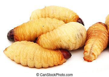 larvas, sagú, alimento, aislado, gusano, insecto, asiático, ...