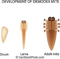 larve, infographics., abbildung, freigestellt, hintergrund.,...