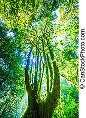las, drzewa, zielony, sunlight., cielna, natura