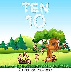 las, dziesięć, małpa