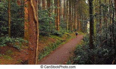 las, jogging, człowiek, 4k, ścieżka