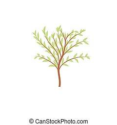las, liście, drzewo, wektor, cienki, pień, logo., park.