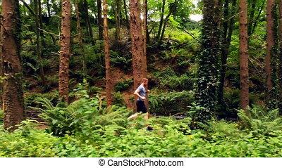 las, obsadzać jogging, 4k