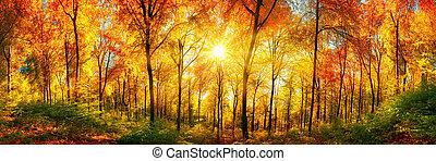 las, panorama, w, jesień