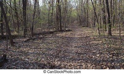 las, pieszy, zielony