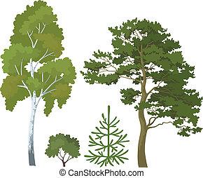 las, rośliny, komplet