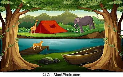 las, rzeka, zwierzęta, żyjący