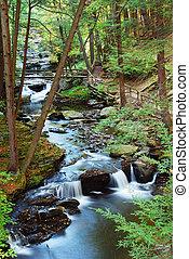 las, zatoczka, z, hiking, ślady