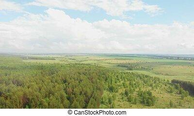 las, zielony, otwarty, pod, deszcz, pole