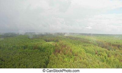 las, zielony, otwarty, pod, mgła, deszcz, biały