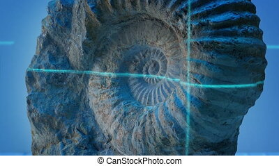 Laser Beam Scans Ancient Shell Fossil - Laser beam scans a...