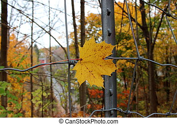 Last fall leaf trapped in fencing