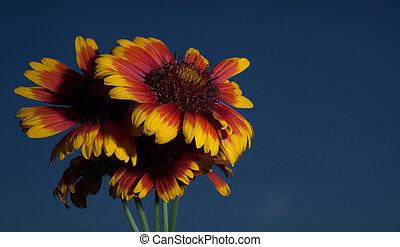 Last flowering light