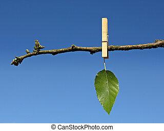 last green leaf