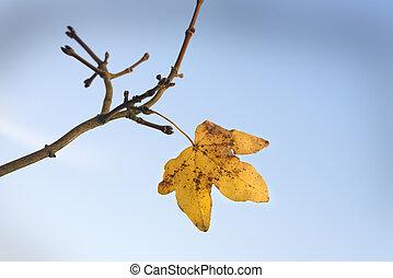 Last Leaf of Fall