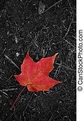 Last Leaf of the Fall