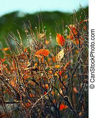 last leaves on a bush