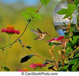 Last of the hummingbirds