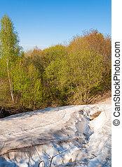 Last snow, green trees