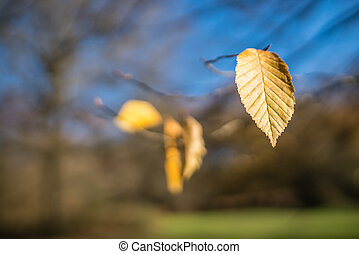 Last yellow leaf of autumn