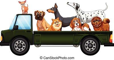 lastbil, og, hunde
