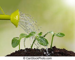 lata molhando, aguando, jovem, plantas