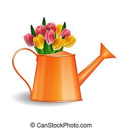 lata molhando, com, grupo, tulips, isolado, branco