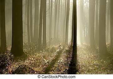 Late autumn forest at dawn