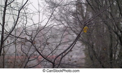 Late autumn scene with bare trees and falling snow - Slow...