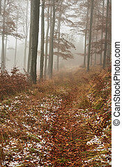 Late autumn snowy beech forest - Late autumn view of the...