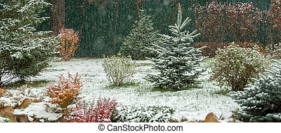Late autumn, the first snow on the trees in the garden