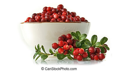 Late cowberry. Branch of red cowberries