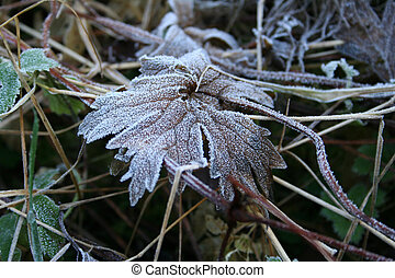 Hoarfrost on a grass