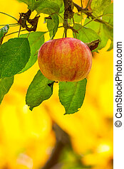 sweet ripe fruit on the branch