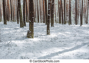 Late spring snow in the forest, unusual phenomena