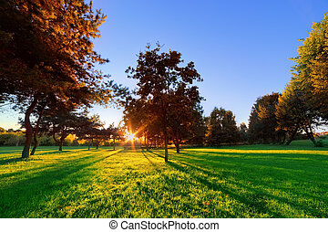 Late summer, autumn sunset in a park. Sunbeams on green lawn
