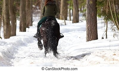 Late winter. A woman walking on a horse in the forest on a...