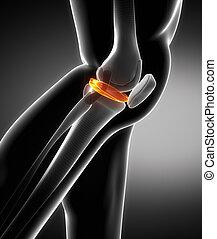 lateraal, meniscus, aanzicht