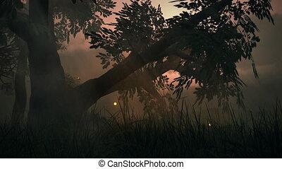 lato, łąka, kaprys, magiczny, (1145), światła, drewna, wróżka, fireflies, pętla