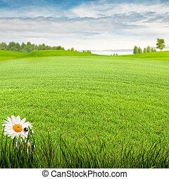 lato, łąka, piękno, tła, środowiskowy, dzień