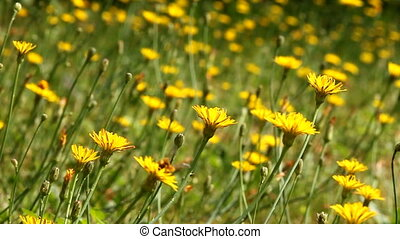 lato, łąka