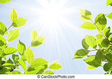 lato, abstrakcyjny, słoneczny, bokeh, zielone tło, liście