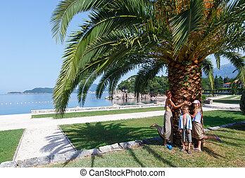 lato, drzewo genealogiczne, park, dłoń, (montenegro)
