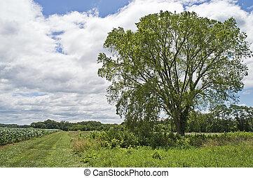 lato, drzewo, i, pole