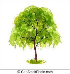 lato, drzewo