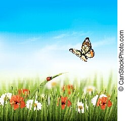 lato, illustration., barwny, natura, wektor, kwiaty, butterfly.