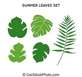 lato, komplet, liście, drzewo, tropikalny, dłoń