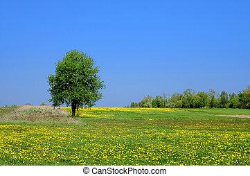 lato, krajobraz