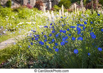 lato, kwiaty, len, ogród